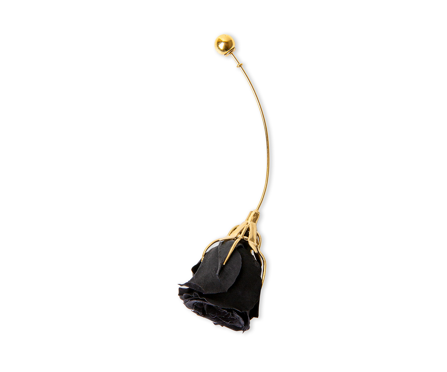 Long gold earring with natural black rose